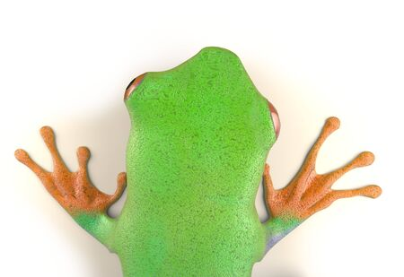 rain forest: red eyed tree frog from tropical rainforest of Costa Rica isolated on white. Beautiful green and blue treefrog is an exotic animal from the rain forest. 3d render