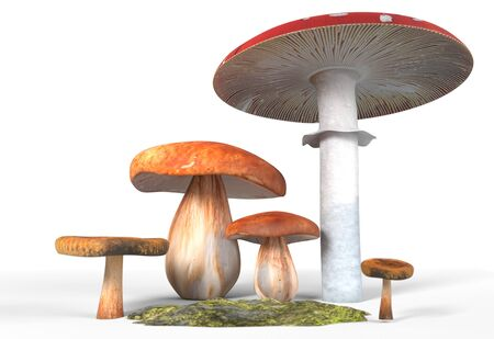 cep: ceps, paxil, amanita muscaria mushrooms with moss isolated on white 3d illustration Stock Photo