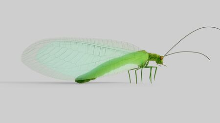 chrysopidae: Chrysopidae insect green lacewing isolated 3d illustration