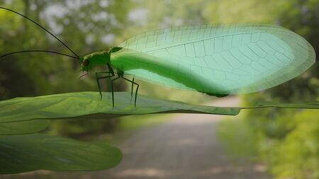 chrysopidae: Chrysopidae insect green lacewing 3d illustration Stock Photo