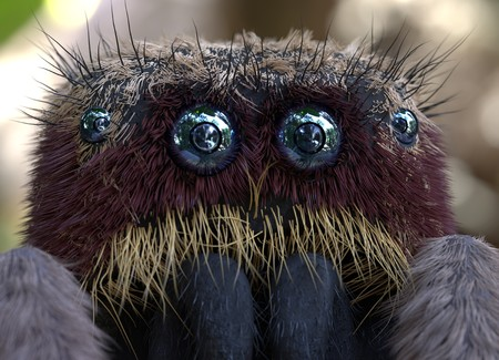 Salticus scenicus jumping spider macro 3d illustration
