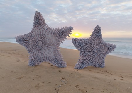 Two violet starfish on sandy beach with sunrise 3d illustration