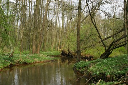 brook trout: Trout brook Rossel in Saxony-Anhalt  Germany