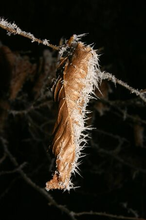 bleakness: A leaf in winter with frost occupied