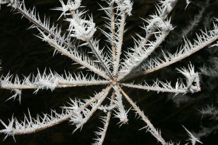 desolaci�n: Dotada de flor marchito de las heladas en invierno