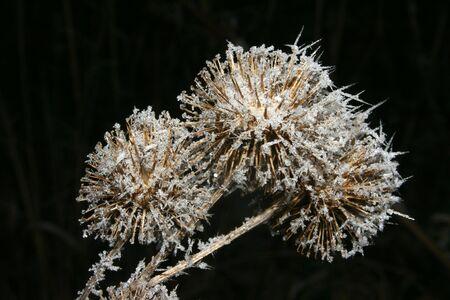 desolaci�n: Tres con las heladas en invierno ocupaban percebes