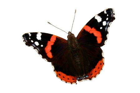 admiral: Red Admiral (Vanessa atalanta) - isolated