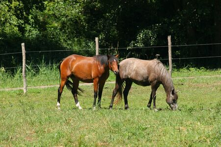 grassing: Horses in a pasture