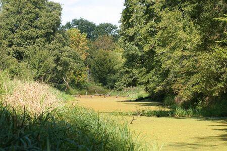 floodplain: Pond in a floodplain Stock Photo