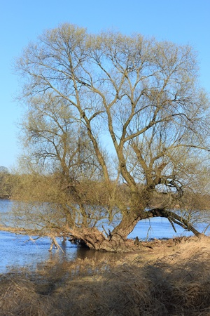 floodplain: Willows in a floodplain in early spring Stock Photo