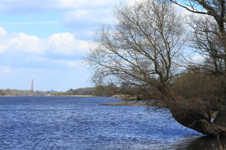 scrub grass: Elbe river in early spring