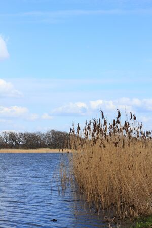 Lake in a floodplain in early spring Stock Photo
