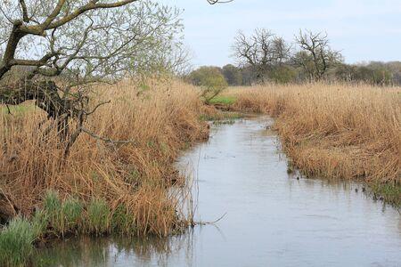 floodplain: Stream in a floodplain, in spring