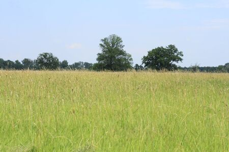 floodplain: Meadow in a floodplain in summer
