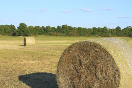 Hay bales on a meadow photo