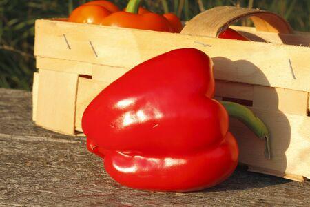Piments fraîchement cueillies sur une table en bois