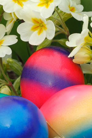 Easter eggs with flowers in a meadow photo