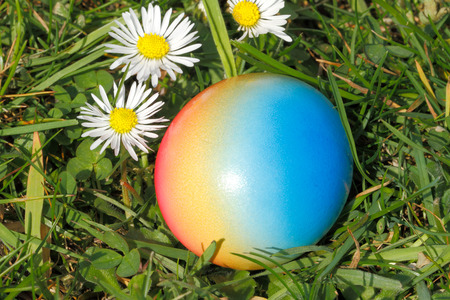 Easter egg with flowers in a meadow photo
