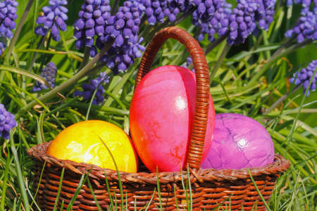 Easter eggs in a easter basket, with flowers in a meadow photo