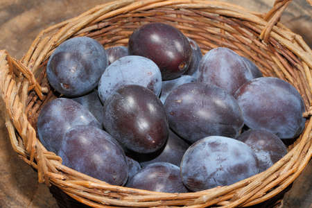 Freshly harvested plums in a basket on a wooden table