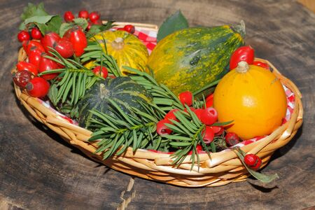 ash gourd: Autumn decoration, pumpkin, gourd, rose hips, berries of mountain ash and yew in a basket