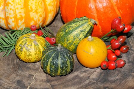 ash gourd: Autumn decoration, pumpkin, gourd, rose hips, berries of mountain ash and yew on a table Stock Photo
