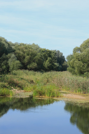 floodplain: Pond in a floodplain Stock Photo