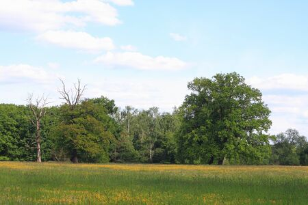 Meadow with death trees, solitary oaks and forest in the floodplain of the Elbe river in Saxony-Anhalt  Germany