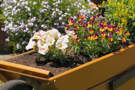 Small wooden wheelbarrow with flowers as decoration in a garden