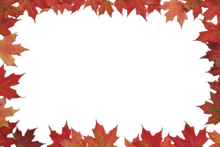 Red maple leaves surrounding white background.