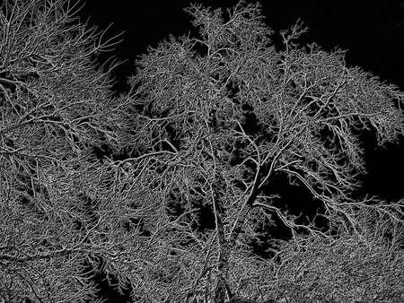Computer enhanced ice covered tree on black