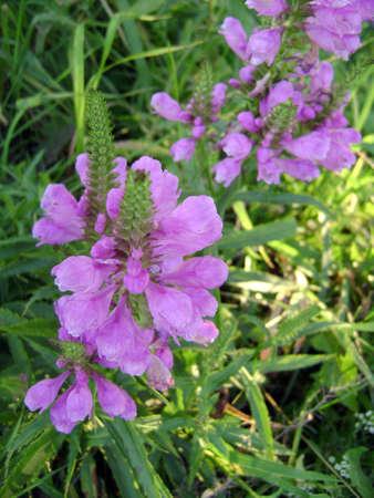 light purple summer flowers