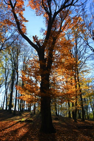 aloneness: Forest on the mountain Avala close to Serbian capital,Belgrade Stock Photo
