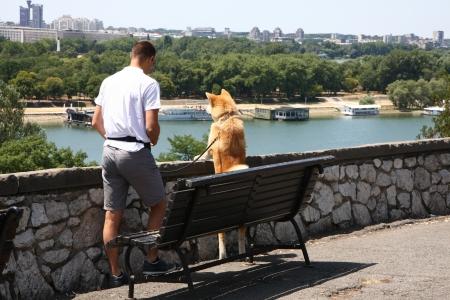 guar: Japanese dog Akita inu at Belgrade fortress Kalemegdan,Serbia