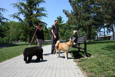 aggressiveness: Puppies of Akita Inu and Newfaundlander resting  in public park