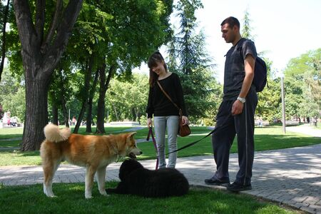 akita: Puppies of Akita Inu and Newfaundlander resting  in public park