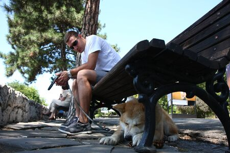 aggressiveness: Lazy Akita Inu puppy cooling under bench in public park Editorial