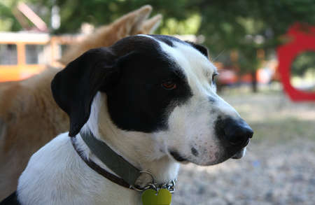 mongrel: Portrait of beautiful mongrel dog posing in dog park