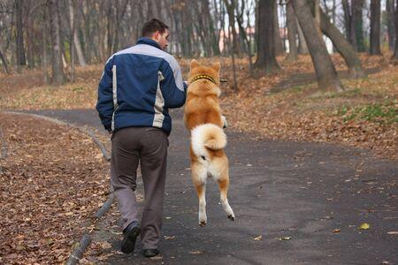 persona saltando: Akita Inu con su dueño atrapa trozo de madera en el parque público