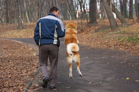 courageous: Akita inu with its owner catches piece of wood in public park Stock Photo