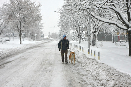 a blizzard: Akita Inu and its owner walking in the blizzard