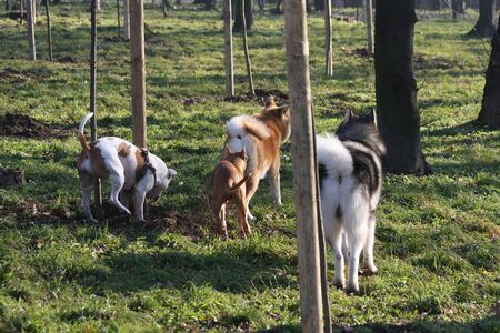 breeds: Dogs of different breeds walking friendly in public park