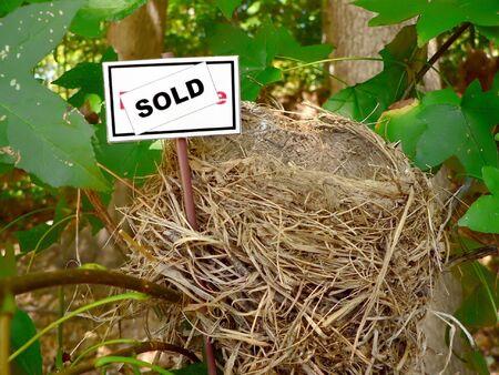 real estate market concept photo of a bird nest  Stock Photo