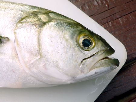photo focused on a Bluefish head placed on a cuting board Stock fotó
