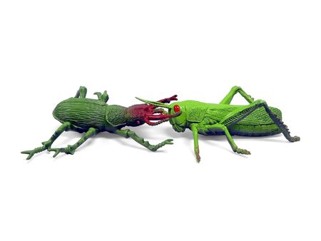 plastic toy insects posed to show beetle attacking a grasshopper