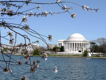 early blossoms: photo of early blooming Cherry Blossoms in Washington, DC during the beginning of Spring with Jefferson Memorial in the background