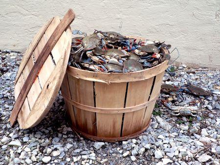 メリーランドのチェサピーク湾からのライブの青カニのブッシェル バスケットの写真