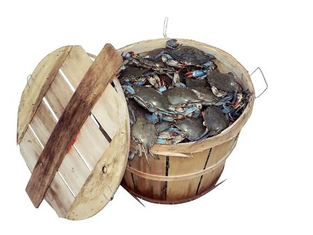isolated photo of a bushel basket of live blue crabs from the Chesapeake Bay of Maryland