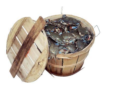 bushel: isolated photo of a bushel basket of live blue crabs from the Chesapeake Bay of Maryland