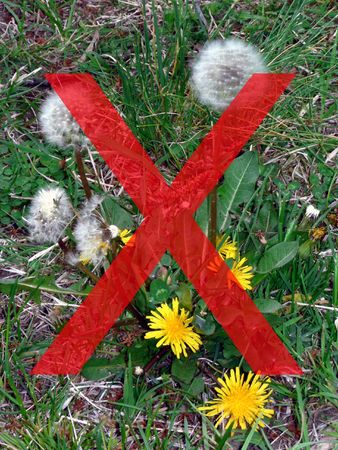 nuisance: extermination symbol over photo of a dandelion weed  that sprouted in a yard